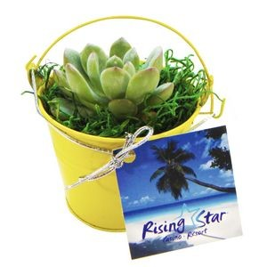 Assorted Succulents in Yellow Metal Pail