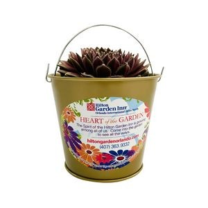 Assorted Succulents in Red Metal Pail