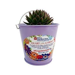Assorted Succulents in Purple Metal Pail